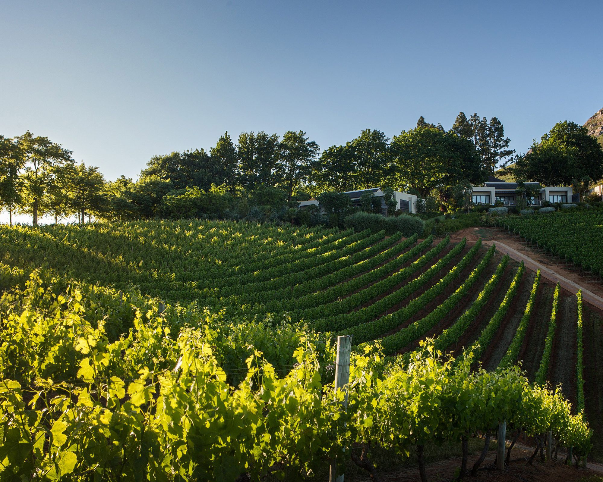 The Vineyards of the Delaire Graff estate in Stellenbosch, South Africa
